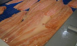 Protein-Tec Salmon