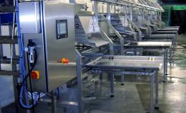 Head Processing Line
